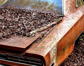 1969 Dodge Super Bee in woods Photograph