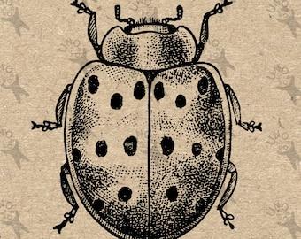 Beetle Ladybug Image Instant Download Digital printable vintage picture clipart graphic scrapbooking, burlap, kraft, decor  etc HQ 300dpi