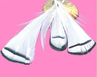 5 black and white natural feathers 7 / 9cm