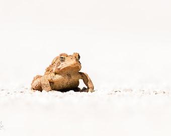 High Key Bullfrog