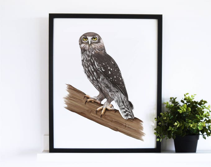The Barking Owl // White Collection