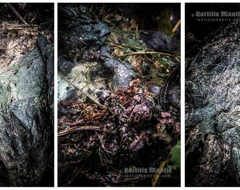 Blue Decay | Photography | 3 prints | Limited edition