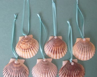 Cape Cod  Scallop Shell Ornaments, Set Of 6, Christmas Ornaments, Favors, Gifts, Seaside Decorations
