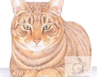 Monty the Cat - Blank Card