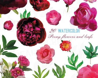Poeny watercolor clip art collection, colorful watercolor graphics, poeny leaf and flowers, vector and individual PNG files, diy invitation