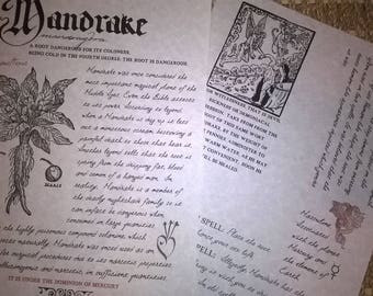 Mandrake Root- Herbology Pages/Book of Shadows/Mythic/Parchment Pages