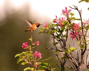 Hummingbird Wall Art, Hummingbird Photo, Hummingbird Decor, Hummer, Hummingbird Print, Humming Bird, Bird Print, Bird Photography,Bird Decor