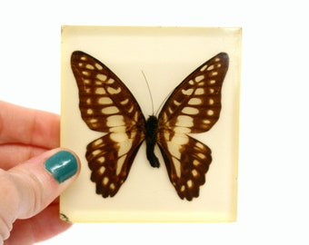 Vintage Lucite Butterfly Paperweight (As Is)