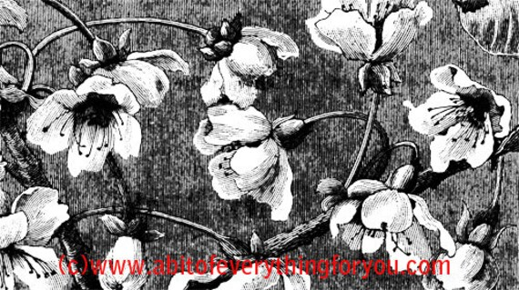 "floral flowers background pattern 9.5"" x 17"" backdrops vintage art printable digital download image graphics floral prints black and white"