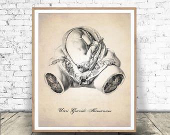 Human Anatomy INSTANT DOWNLOAD, Uterus Print, In Utero Art Print, Medical Drawing, Anatomy Art, Human Anatomy, PRINTABLE Uterus Illustration