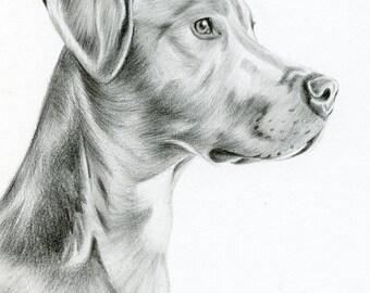 Custom Pencil Drawing, size 5 x 7, Custom Pet Portrait, Custom Pet Drawing, Dog Art, Dog Portrait, Dog Pencil Drawing, Graphite, Pet Art