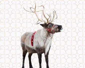 Reindeer Secrets Overlay + Bonus Christmas Tree Farm Background!