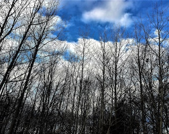 WINTER TREES Fine Art Print of my photo 5 x 7 Epson inks on Canon photo paper, clouds, trees, sky