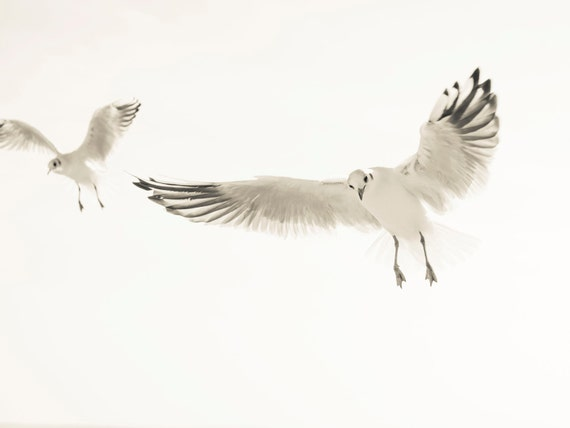 SEAGULLS 1. Seagull Print, Birds Flying, Beach Print, Wildlife Picture, Dorset Art, Photographic Print