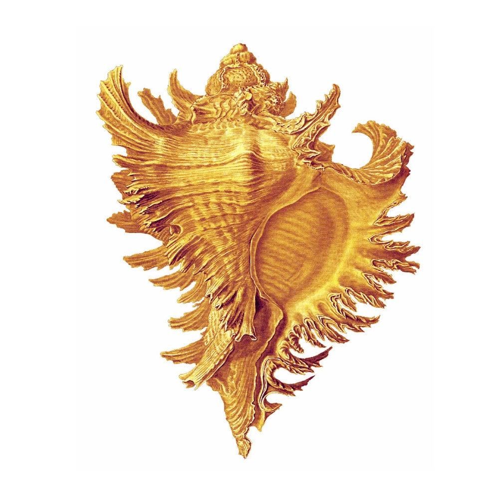 Golden Conch Shell nautische Vintage Style Art Print Beach