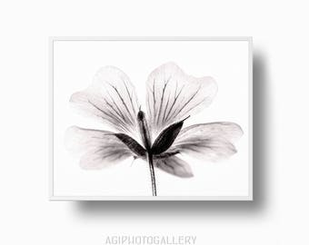 Anemone print sepia flower print flower print flower photo cranesbill flower print black and white flower print botanical flower print flower wall art botanical print minimalistic flower print mightylinksfo