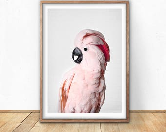 Pink Cockatoo, Prints, Cockatoo Bird, Digital Download, Gallah Wall Art, Printable, Tropical Print, Pink Wall Art, Australia,