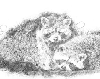 Digital download for your own prints-motif raccoons in sketch style