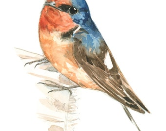 Barn Swallow watercolor painting - bird watercolor painting - 5x7 inch print - 0048