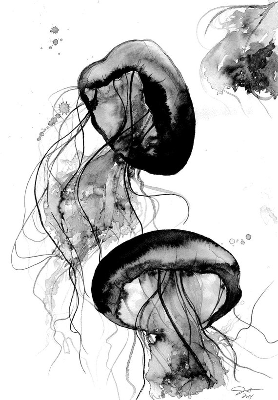 Black and White Jellyfish watercolor study by Jessica Durrant
