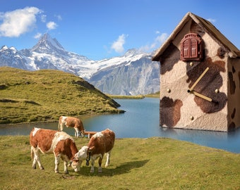 Watch; Cuckoo clock; cuckoo clock; clock; Wall clock; Table clock; Gift; Especially; Exceptional; Extravagant; Decoration; Residential; Moo time;