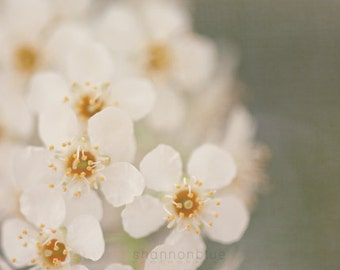 spring nature botanical flower photography / white, yellow, mint green, blossom, bloom / baby white / 8x10 fine art photo