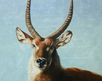 Waterbuck oil on canvas wildlife painting 24x20 by RUSTY RUST / W-44