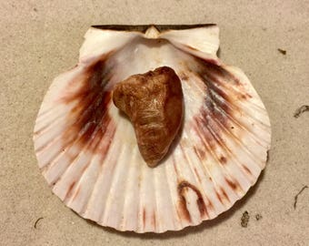 Chicken Heart ~ Hermit Crab Food