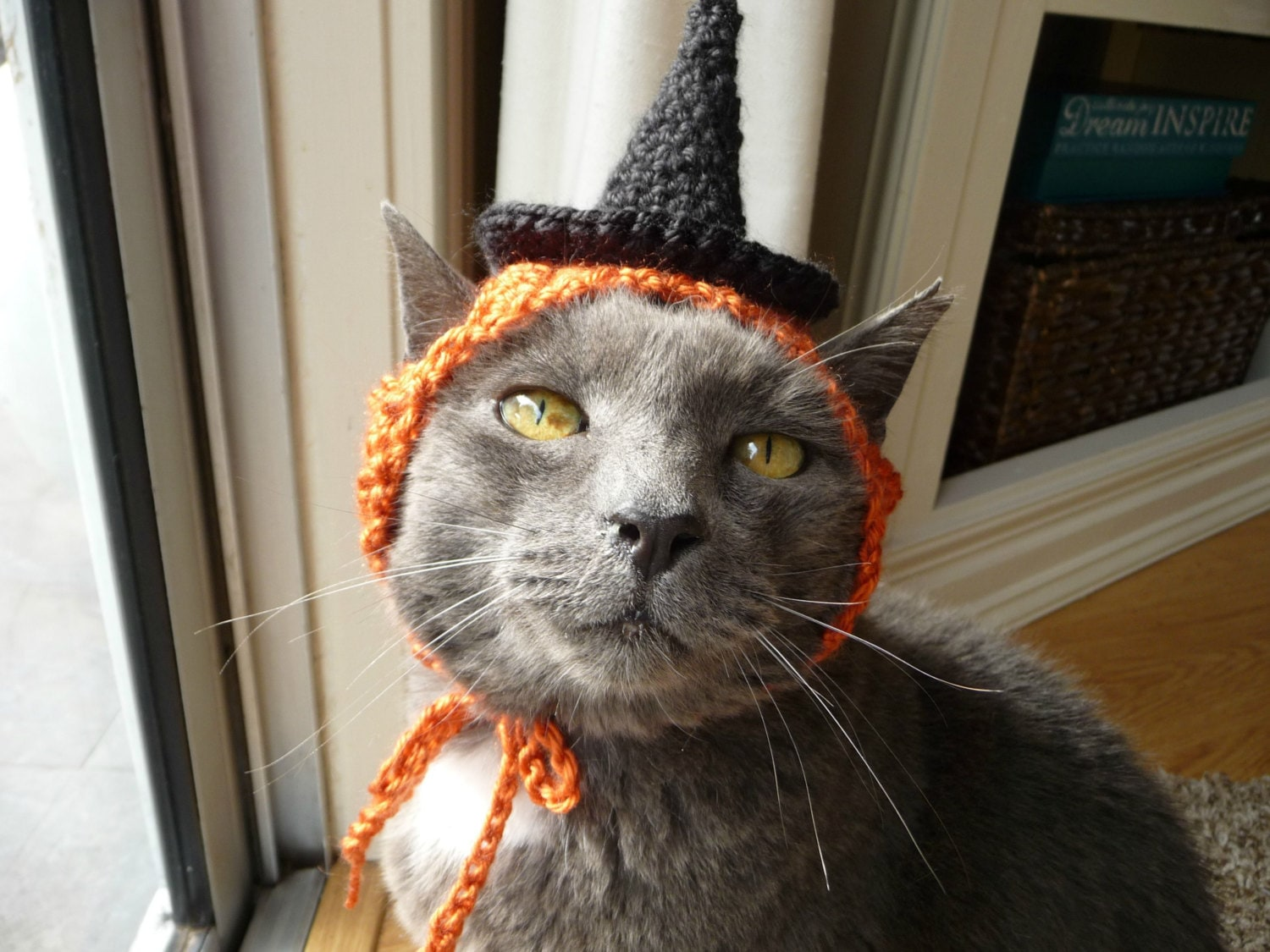 ?zoom & Halloween Costume for Cat Witch Hat for a Cat Holiday Hat Fall