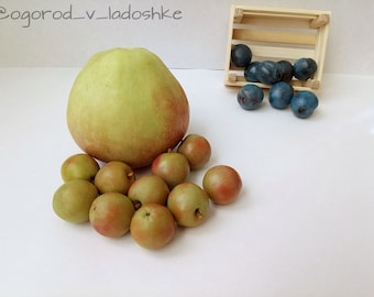 Miniature polymer clay apple, realistic figures, game with kids, gift, baby gift, miniature food, toys