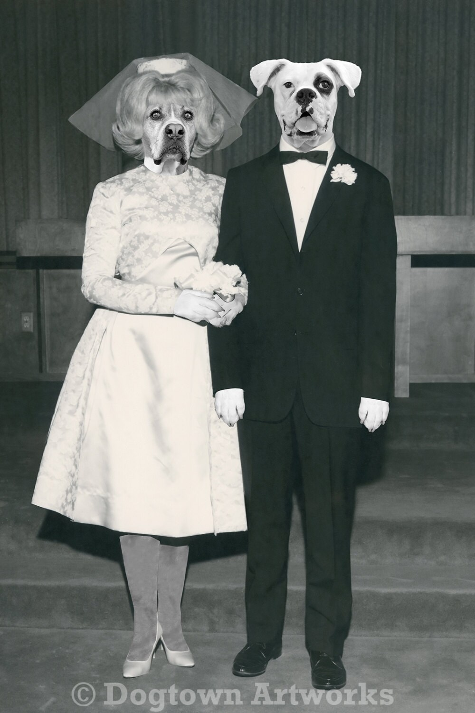 Wedding Day large original photograph of Boxer dog couple