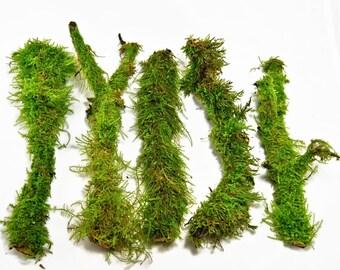 Branches with live moss , Terrarium decor, Live decor, vivarium, floral decor, fairy garden, moss covered sticks, Ecofriendly decor