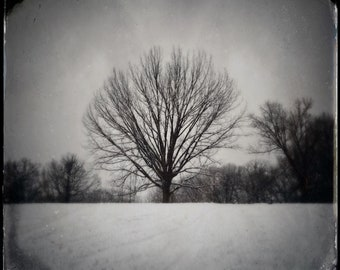 The Secret Keeper. Photograph, Art Print, Art, Photography, For Home, Wall Art, Wall Decor, Tree, Exquisite, Obscura.