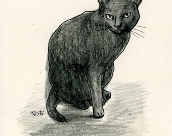 Cat original drawing - P025November2015