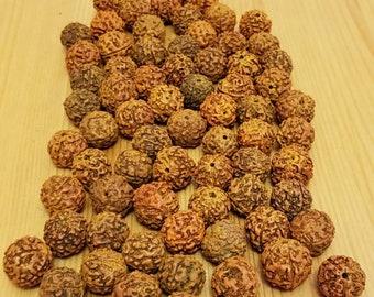 Rudraksha beads, 70