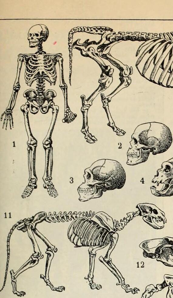 Großzügig Elefant Anatomie Bilder Galerie - Anatomie Ideen - finotti ...