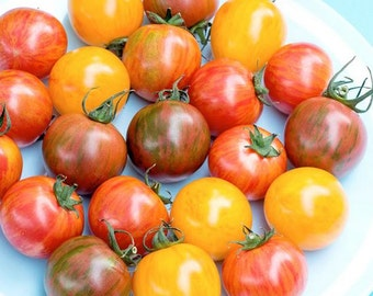 Bumblebee Striped Cherry Tomato Mix - OP Seeds