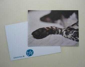 sleeping dog, eight postcards, postcards, set, minnievoss, analog photography, offset printing, postcard, postcard