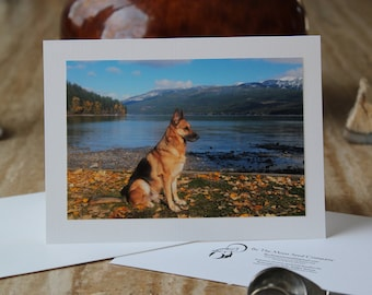 Blank Cards, FREE SHIPPING, German Shepherd Photo Cards, Zorro in Whitefish, Montana, Rabbit Rescue Donation