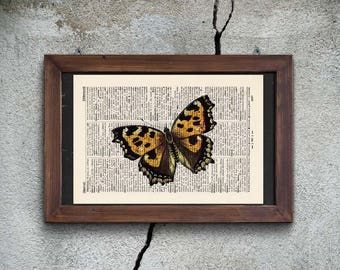 Pressure - BUTTERFLY No.. 8 - antique book page