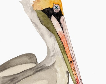 Brown Pelican Watercolor Print