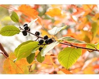 Autumn Card, Fine Art Photograph Note Card,  Fall Foliage, Berry Photograph, Blank Greeting Card