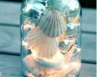SEASHELL FAIRY LIGHTS in jar