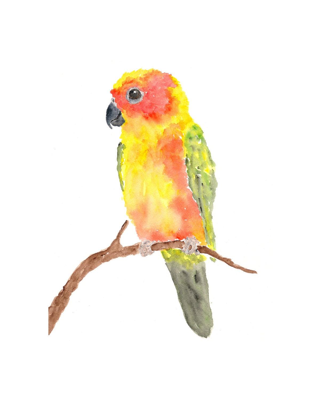 Watercolor parrot painting sun conure parrot art tropical