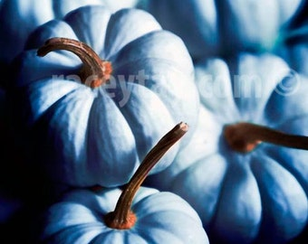 Blue Pumpkin Photograph Rustic Art for Kitchen in Teal Blue & Brown - Food Photography