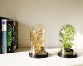 Forest of artificial plants, Cabinet of curiosities, dome terrarium cloche glass, Christmas birthday gift, Garden decor