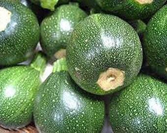 Zucchini round squash