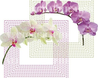Orchids. Digital Clipart. Graphic Design. Scrapbooking. Vector.  Zip - archive, which Svg, Jpg, Png, Pdf, Dxf. Discount coupons