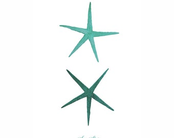 Starfish Sea Star Mint Green Nautical Art Print Natural History Beach House Decor Aqua