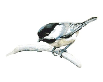 3 Cards with envelopes - Chickadee Bird - prints of original drawing